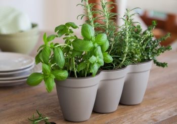 Container Gardening Workshop
